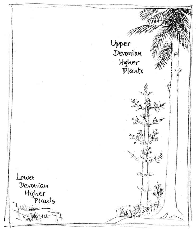 schematic drawing illustrating the evolution of plants in the Devonian