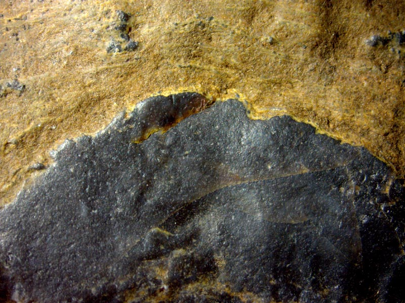 microbial cloud in Rhynie chert