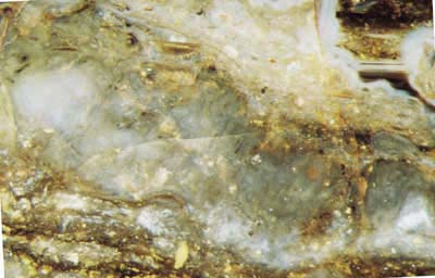 patch with poorly seen tube-like filaments near Pachytheca in Rhynie chert