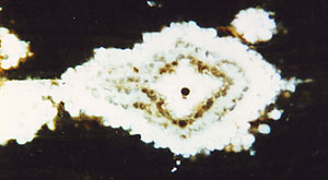 Fossil wood cross-section with structured spots